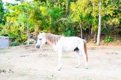 Волшебная лошадь Стоковые Изображения RF