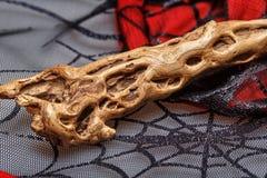 Волшебная палочка на сети Стоковое Фото