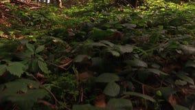 Волшебная природа лета во всех тонкостях, солнечного одичалого леса видеоматериал