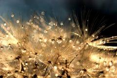 Волшебная роса утра стоковое изображение rf