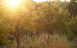 Волшебная сцена захода солнца лета Стоковое Изображение