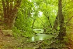 Волшебное болото леса стоковые фотографии rf