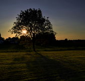 Волшебное дерево Стоковое Изображение RF
