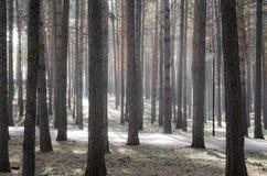Волшебное утро в лесе Стоковые Изображения RF