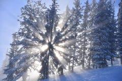Волшебное forelst зимы стоковое изображение