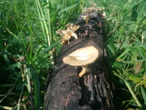 Волшебные грибки семьи в луге Стоковые Фото