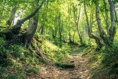 Волшебные древесины в солнце утра Fairy лес в осени Драматическая сцена и живописное изображение Чудесное естественное Стоковое фото RF