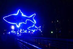 Волшебные света в парке Gruga, Германии Стоковое Изображение