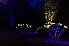 Волшебные света в парке Gruga, Германии Стоковое Изображение RF