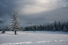 Волшебный ландшафт гор зимы после шторма снега Стоковое Изображение RF