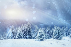 Волшебный ландшафт зимы, предпосылка с некоторыми мягкими самыми интересными a Стоковые Фотографии RF