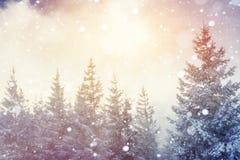 Волшебный ландшафт зимы, предпосылка с некоторыми мягкими самыми интересными a Стоковая Фотография