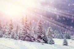 Волшебный ландшафт зимы, предпосылка с некоторыми мягкими самыми интересными a Стоковое Изображение RF
