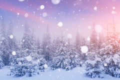 Волшебный ландшафт зимы, предпосылка с некоторыми мягкими самыми интересными a Стоковые Фото