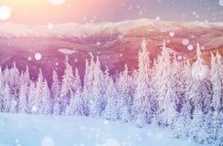 Волшебный ландшафт зимы, предпосылка с некоторыми мягкими самыми интересными a Стоковое Фото