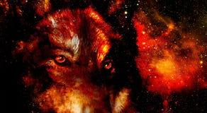 Волшебный волк космоса, multicolor коллаж машинной графики Огонь космоса Стоковые Изображения