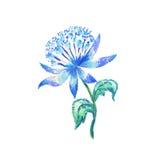 Волшебный голубой цветок Стоковое Фото