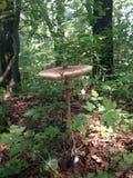 волшебный гриб Стоковые Изображения RF