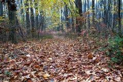 Волшебный лес в сезоне осени Стоковая Фотография