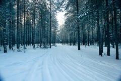 Волшебный лес зимы, сказка, стоковая фотография rf