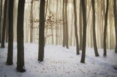 Волшебный лес рождества с туманом и снег с загадочным светом стоковое фото rf