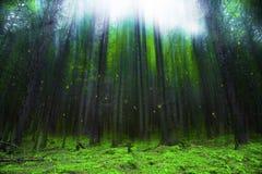 Волшебный лес фантазии с светами и туманом Стоковая Фотография