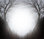 Волшебный лес Стоковое Фото