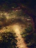 Волшебный лес стоковые фотографии rf