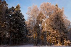 Волшебный заморозок зимы на ветвях Стоковые Изображения