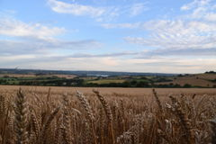 Волшебный заход солнца над пшеничным полем стоковое фото rf