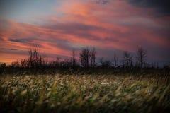 Волшебный заход солнца прерии Стоковое фото RF