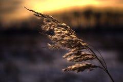 Волшебный заход солнца прерии Стоковые Фотографии RF