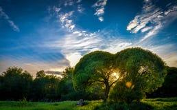 волшебный заход солнца Стоковое Фото