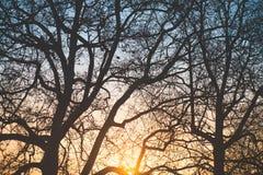 волшебный заход солнца Стоковые Фото