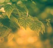 Волшебный зеленый лес стоковые фото