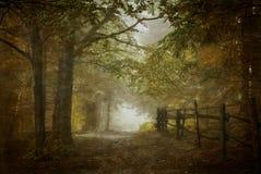 Волшебный путь пущи Стоковое Фото