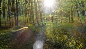 Волшебный путь Стоковое фото RF