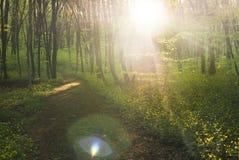 Волшебный путь Стоковые Фотографии RF