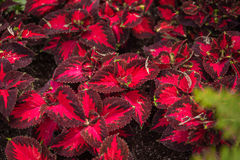Волшебный флористический сад Стоковая Фотография