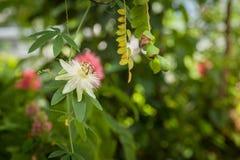 Волшебный флористический сад Стоковое Изображение RF
