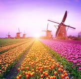 Волшебный fairy завораживающий ландшафт с тюльпаном середины ветрянок Стоковое Фото