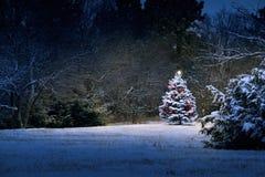 Волшебным рождественская елка покрытая снегом стоит вне ярко стоковые изображения