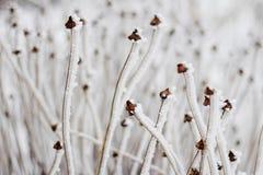 Волшебство зимы на заводах Стоковое Изображение