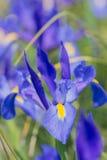 Волшебство сини радужки Стоковые Фото
