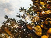 Волшебство солнечного света Стоковое фото RF