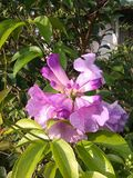Волшебство цветка Стоковые Фото