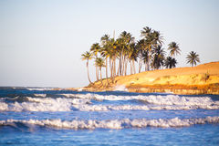 воды великобританской точной бирюзы валов вертела песка рая ладони островов острова песочной виргинские белые Стоковые Изображения