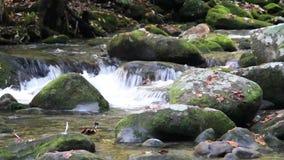 Воды следа мотора вилки реветь в закоптелых горах сток-видео