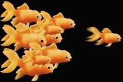 вперед гонка goldfish Стоковая Фотография