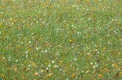 Впечатление фото лужка цветка Стоковые Изображения